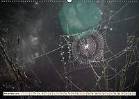 Spinnennetze - Wunder der Natur (Wandkalender 2019 DIN A2 quer) - Produktdetailbild 11