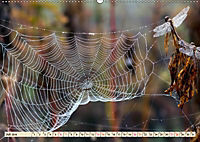 Spinnennetze - Wunder der Natur (Wandkalender 2019 DIN A2 quer) - Produktdetailbild 7