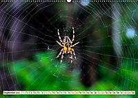 Spinnennetze - Wunder der Natur (Wandkalender 2019 DIN A2 quer) - Produktdetailbild 9