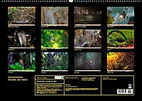 Spinnennetze - Wunder der Natur (Wandkalender 2019 DIN A2 quer) - Produktdetailbild 13