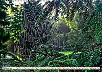 Spinnennetze - Wunder der Natur (Wandkalender 2019 DIN A2 quer) - Produktdetailbild 10