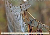 Spinnennetze - Wunder der Natur (Wandkalender 2019 DIN A4 quer) - Produktdetailbild 2