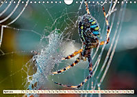 Spinnennetze - Wunder der Natur (Wandkalender 2019 DIN A4 quer) - Produktdetailbild 4