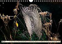 Spinnennetze - Wunder der Natur (Wandkalender 2019 DIN A4 quer) - Produktdetailbild 5