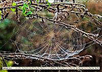 Spinnennetze - Wunder der Natur (Wandkalender 2019 DIN A4 quer) - Produktdetailbild 1