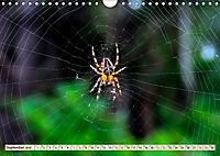 Spinnennetze - Wunder der Natur (Wandkalender 2019 DIN A4 quer) - Produktdetailbild 9