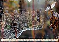 Spinnennetze - Wunder der Natur (Wandkalender 2019 DIN A4 quer) - Produktdetailbild 7