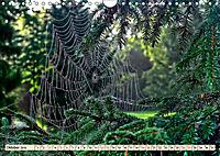 Spinnennetze - Wunder der Natur (Wandkalender 2019 DIN A4 quer) - Produktdetailbild 10