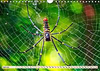 Spinnennetze - Wunder der Natur (Wandkalender 2019 DIN A4 quer) - Produktdetailbild 6
