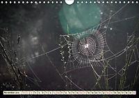 Spinnennetze - Wunder der Natur (Wandkalender 2019 DIN A4 quer) - Produktdetailbild 11