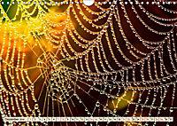 Spinnennetze - Wunder der Natur (Wandkalender 2019 DIN A4 quer) - Produktdetailbild 12