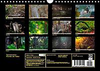 Spinnennetze - Wunder der Natur (Wandkalender 2019 DIN A4 quer) - Produktdetailbild 13