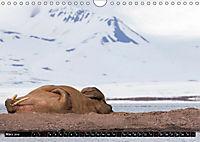 Spitzbergen - Arktische Impressionen (Wandkalender 2019 DIN A4 quer) - Produktdetailbild 3