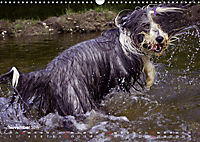 SPLASH - Hunde im Wasser (Wandkalender 2019 DIN A3 quer) - Produktdetailbild 11