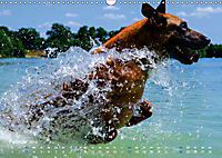 SPLASH - Hunde im Wasser (Wandkalender 2019 DIN A3 quer) - Produktdetailbild 2