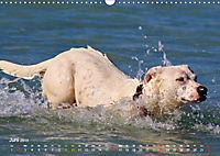 SPLASH - Hunde im Wasser (Wandkalender 2019 DIN A3 quer) - Produktdetailbild 6
