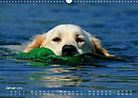 SPLASH - Hunde im Wasser (Wandkalender 2019 DIN A3 quer) - Produktdetailbild 1