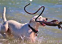 SPLASH - Hunde im Wasser (Wandkalender 2019 DIN A3 quer) - Produktdetailbild 3