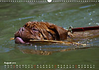 SPLASH - Hunde im Wasser (Wandkalender 2019 DIN A3 quer) - Produktdetailbild 8