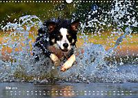 SPLASH - Hunde im Wasser (Wandkalender 2019 DIN A3 quer) - Produktdetailbild 5