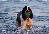 SPLASH - Hunde im Wasser (Wandkalender 2019 DIN A3 quer) - Produktdetailbild 7