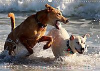 SPLASH - Hunde im Wasser (Wandkalender 2019 DIN A3 quer) - Produktdetailbild 4