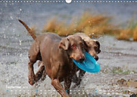 SPLASH - Hunde im Wasser (Wandkalender 2019 DIN A3 quer) - Produktdetailbild 9