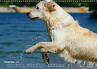 SPLASH - Hunde im Wasser (Wandkalender 2019 DIN A3 quer) - Produktdetailbild 12