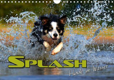 SPLASH - Hunde im Wasser (Wandkalender 2019 DIN A4 quer), Renate Bleicher
