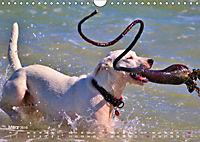 SPLASH - Hunde im Wasser (Wandkalender 2019 DIN A4 quer) - Produktdetailbild 3