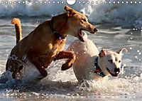 SPLASH - Hunde im Wasser (Wandkalender 2019 DIN A4 quer) - Produktdetailbild 4