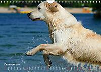 SPLASH - Hunde im Wasser (Wandkalender 2019 DIN A4 quer) - Produktdetailbild 12