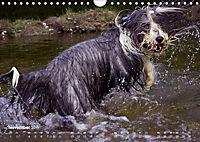 SPLASH - Hunde im Wasser (Wandkalender 2019 DIN A4 quer) - Produktdetailbild 11
