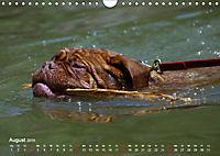 SPLASH - Hunde im Wasser (Wandkalender 2019 DIN A4 quer) - Produktdetailbild 8