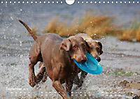 SPLASH - Hunde im Wasser (Wandkalender 2019 DIN A4 quer) - Produktdetailbild 9