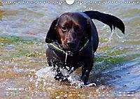 SPLASH - Hunde im Wasser (Wandkalender 2019 DIN A4 quer) - Produktdetailbild 10