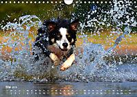 SPLASH - Hunde im Wasser (Wandkalender 2019 DIN A4 quer) - Produktdetailbild 5