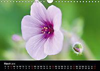 Spring flora (Wall Calendar 2019 DIN A4 Landscape) - Produktdetailbild 3