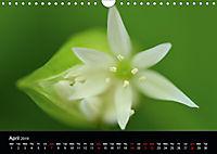 Spring flora (Wall Calendar 2019 DIN A4 Landscape) - Produktdetailbild 4