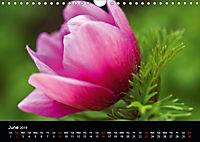 Spring flora (Wall Calendar 2019 DIN A4 Landscape) - Produktdetailbild 6