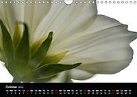 Spring flora (Wall Calendar 2019 DIN A4 Landscape) - Produktdetailbild 10