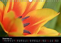 Spring flora (Wall Calendar 2019 DIN A4 Landscape) - Produktdetailbild 12