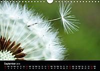 Spring flora (Wall Calendar 2019 DIN A4 Landscape) - Produktdetailbild 9