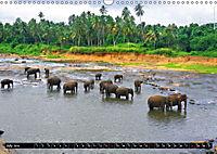 Sri Lanka 2019 Exotic World (Wall Calendar 2019 DIN A3 Landscape) - Produktdetailbild 7