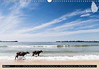 Sri Lanka, eine Reise über die Insel der King Coconut (Wandkalender 2019 DIN A3 quer) - Produktdetailbild 3