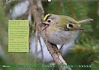 Steckbriefe einheimischer Vögel (Wandkalender 2019 DIN A2 quer) - Produktdetailbild 3