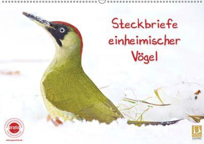 Steckbriefe einheimischer Vögel (Wandkalender 2019 DIN A2 quer), Klaus Feske