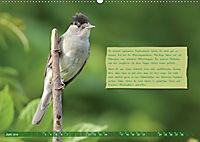 Steckbriefe einheimischer Vögel (Wandkalender 2019 DIN A2 quer) - Produktdetailbild 6