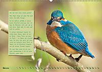 Steckbriefe einheimischer Vögel (Wandkalender 2019 DIN A2 quer) - Produktdetailbild 5
