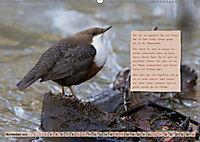Steckbriefe einheimischer Vögel (Wandkalender 2019 DIN A2 quer) - Produktdetailbild 11
